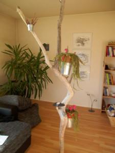 Wohnzimmerbaum